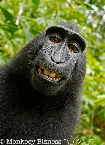 Monkey selfie with watermark resized via API to 50%