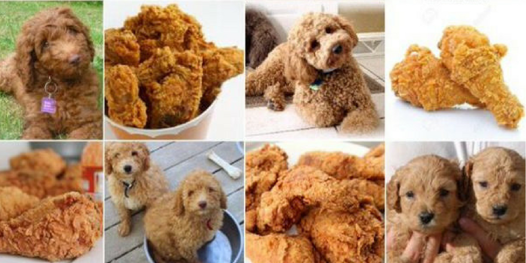 Object detection used for labradoodles and fried chicken